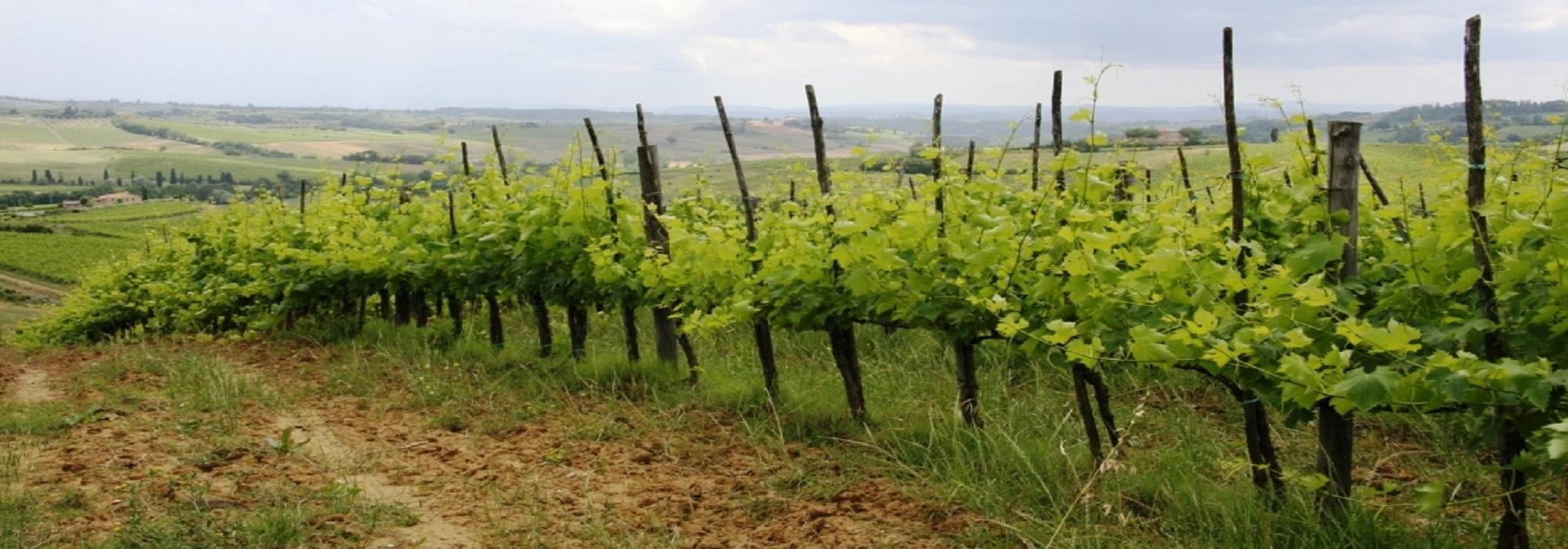 Винодельческие хозяйства