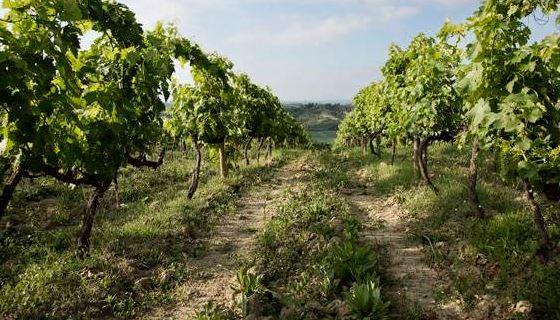Винодельня в Кьянти